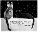Starllight Cats-and-Quote