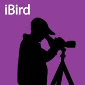 iBird (purple)