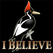 Ivory-billed Woodpecker: I Believe