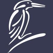 Stylized Kingfisher