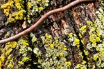 Rusty Fence Tree and Lichen