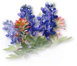 Bluebonnets with Indian Paintbrush