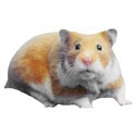 Syrian Hamster Gifts