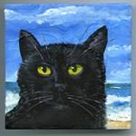 Black Cat at Capitola