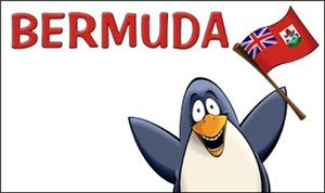 Bermuda Penguins