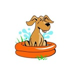 DOG IN SWIMMING POO...