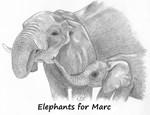 ELEPHANTS FOR MARC