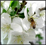 A Busy Bee