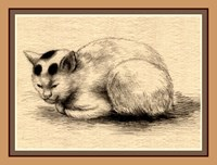 Domestic Cat Japanese Ink Drawing