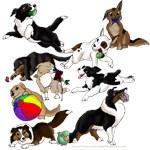 Plethora of Puppies!
