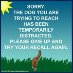 Doggy Disconnected