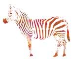 The Colorful Zebra