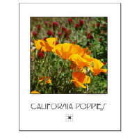 California Poppies Posters + Prints