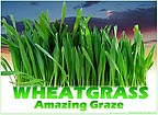 Wheatgrass - Amazing Graze
