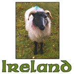 An Irish Sheep