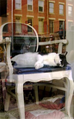 Display of Feline
