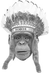 Indian Headdress Monkey