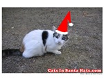 Cats In Santa Hats