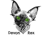 Devon Rex with title