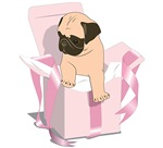 Pink Pug Present