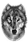 B & W WOLF