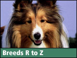 I (Heart) Dog Breeds R to Z