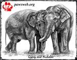 Nicholas & Gypsy PAWSweb.org