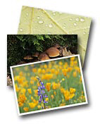 Nature & Scenic Greeting Cards