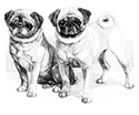 2 Precious Pugs