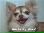 Who Barking Cares