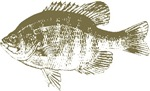 Bluegill