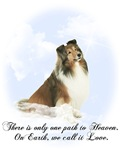 Heavenly Grace Sheltie