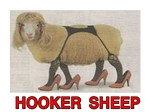 hooker sheep