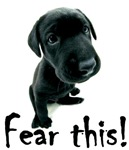 Fear This! Black Lab Puppy