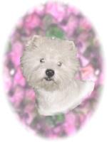 Terrier Flip Mino Camcorders