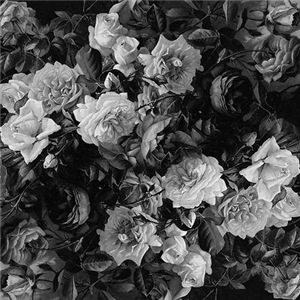 Floral Grey Roses