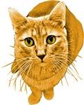 Orange Cat T-shirts