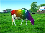 Rainbow Cow T-shirts & Gifts