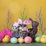 Easter #10