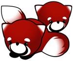 Red Tail Panda