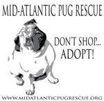 Don't Shop - Adopt!