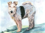 Owen Terrier