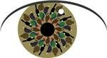 NZ Birds Eye