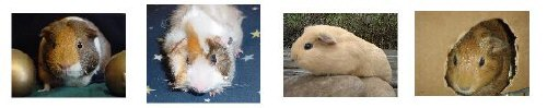 Just Guinea Pig Pictures: T-Shirts, Mugs and More