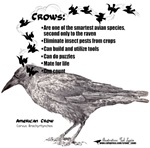 Crows Can!