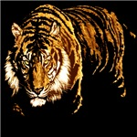 Bengal and White Tigers and USMC Marines