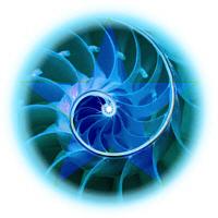Golden mean spiral nautilus shell