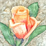 Peach Rose Watercolor