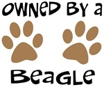 Owned By A Beagle