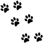 Walk-On-Me Pawprints